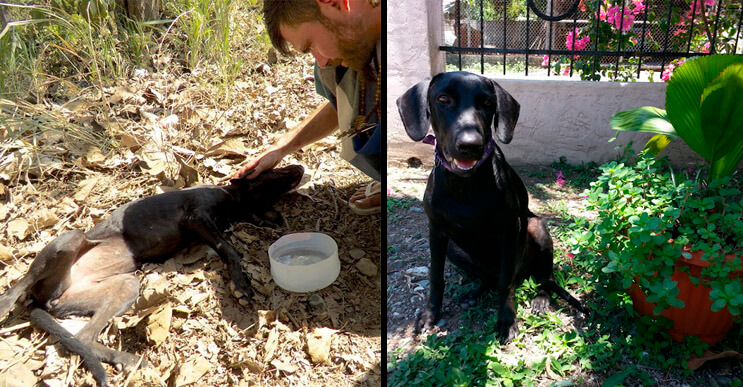 Esta perra estaba vencida y deshidratada pero cuando alguien se le acercó todo cambió