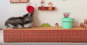Este hámster sería la mascota perfecta de Mario Bros