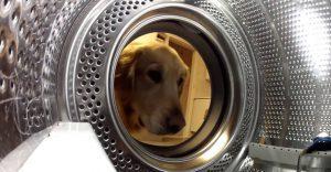 Este perro rescató a su oso de peluche de la lavadora de ropa