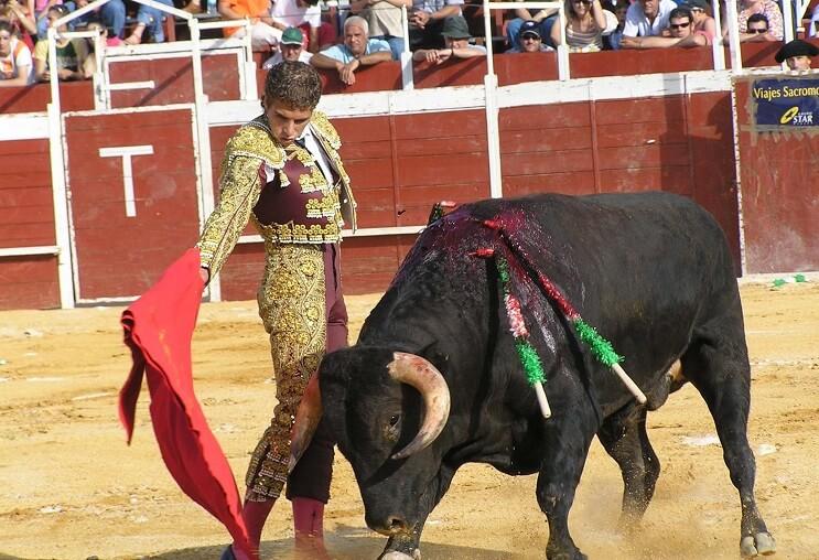 Este toro se cansó de los maltratos y decidió tomar cartas en el asunto 1