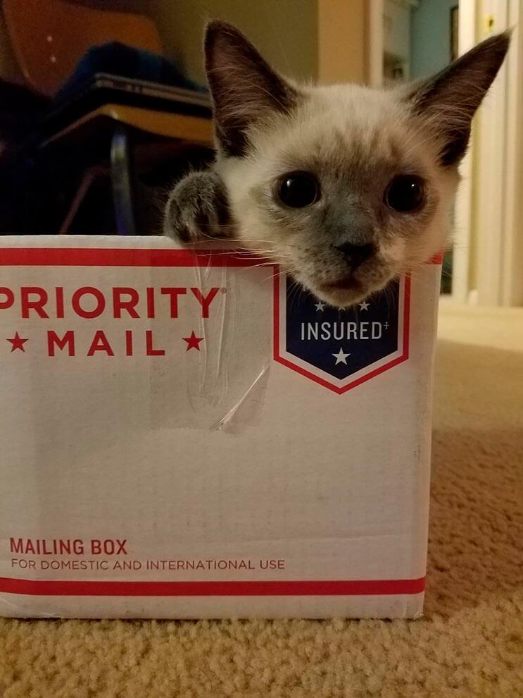 Intentó buscar un hogar para gatita rescatada pero ella tenía otros planes 4