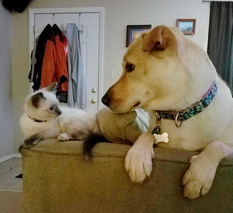Intentó buscar un hogar para gatita rescatada pero ella tenía otros planes 5