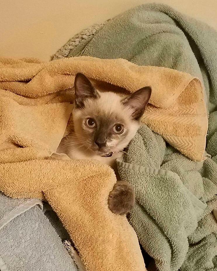 Intentó buscar un hogar para gatita rescatada pero ella tenía otros planes 6