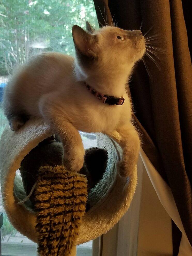 Intentó buscar un hogar para gatita rescatada pero ella tenía otros planes 7