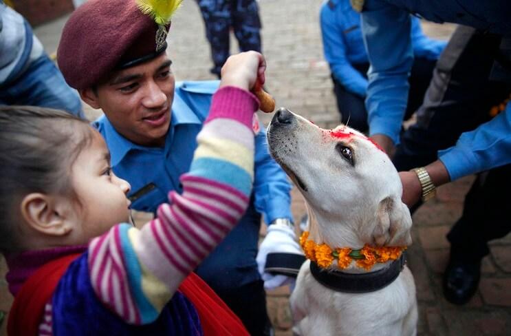 Kukur Tihar, festival que rinde homenaje a los perros como debe ser 11