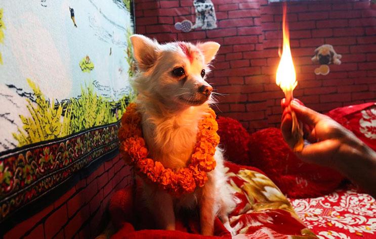 Kukur Tihar, festival que rinde homenaje a los perros como debe ser 3