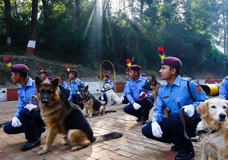 Kukur Tihar, festival que rinde homenaje a los perros como debe ser 5
