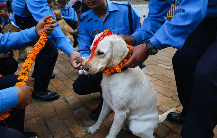 Kukur Tihar, festival que rinde homenaje a los perros como debe ser 6
