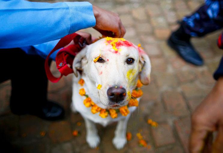 Kukur Tihar, festival que rinde homenaje a los perros como debe ser 8