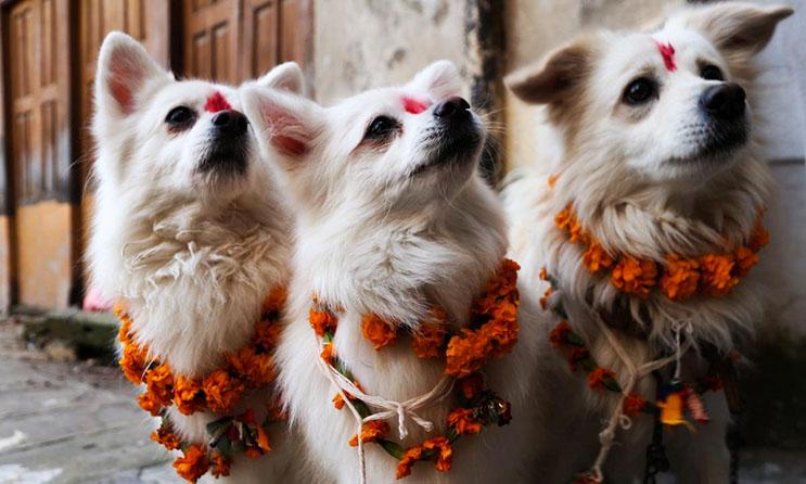 Kukur Tihar, festival que rinde homenaje a los perros como debe ser