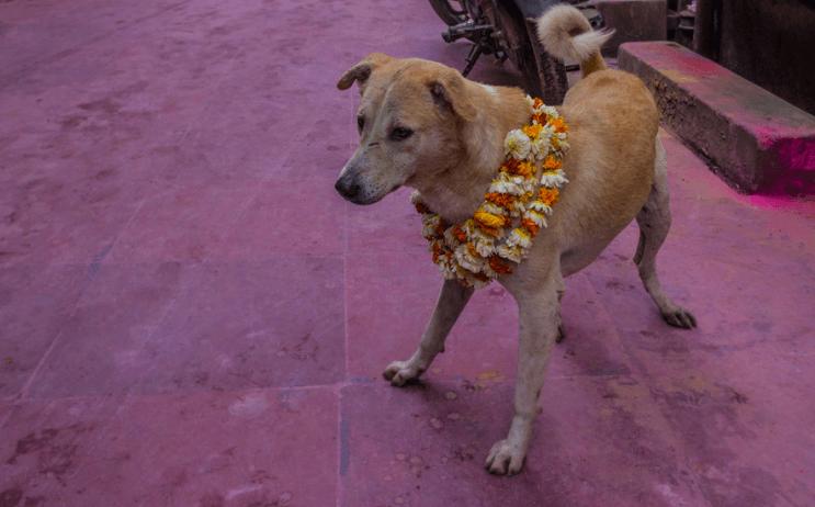 La belleza de la India durante el festival Holi 13