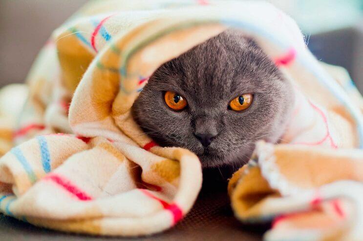 los-gatos-pueden-ser-solitarios-y-se-puede-deber-a-sus-ancestros-solo