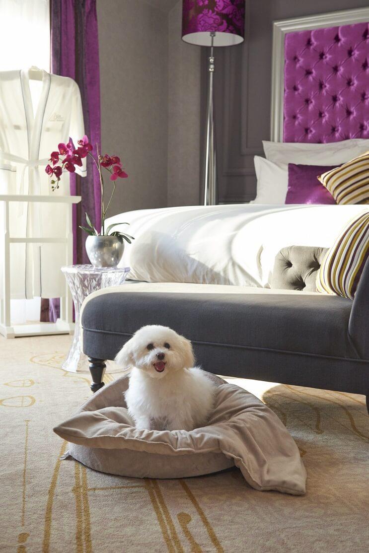 Lujoso hotel en Budapest admite mascotas y les permite gozar magníficas experiencias 1