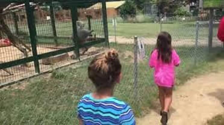 Mira la reacción de este babuino cuando es molestado por dos niñas 2