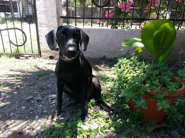 Perrita gaia feliz en el patio