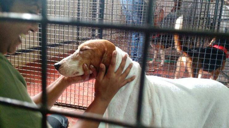 Perros rescatados ven por primera vez la luz del sol 1