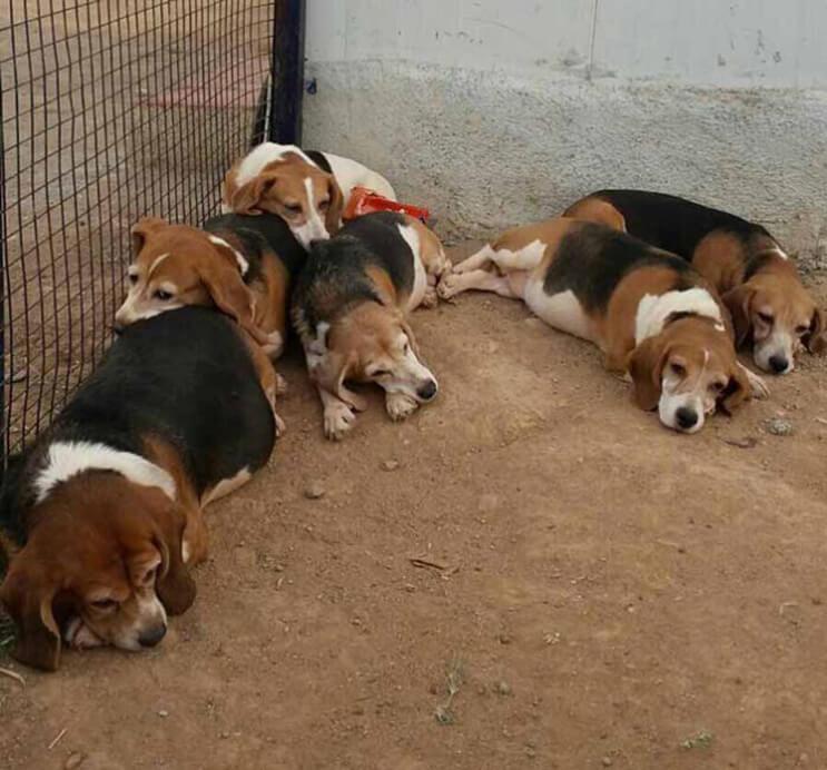 Perros rescatados ven por primera vez la luz del sol 2
