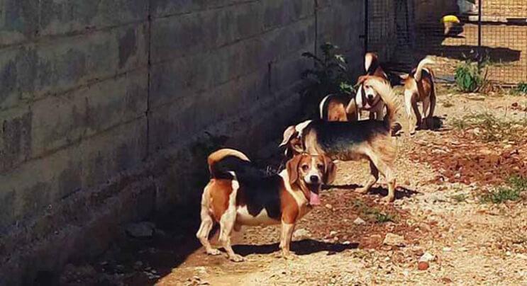 Perros rescatados ven por primera vez la luz del sol 4