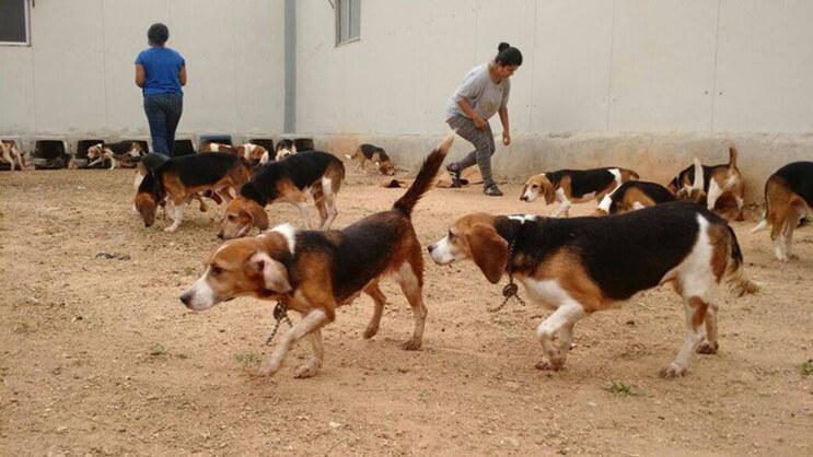 Perros rescatados ven por primera vez la luz del sol 5