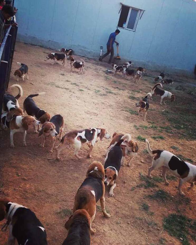 Perros rescatados ven por primera vez la luz del sol 6