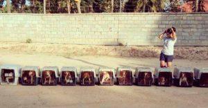 Perros rescatados en la India vieron por primera vez la luz del sol