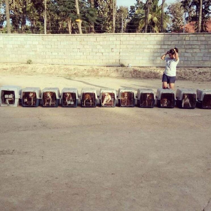 Perros rescatados ven por primera vez la luz del sol