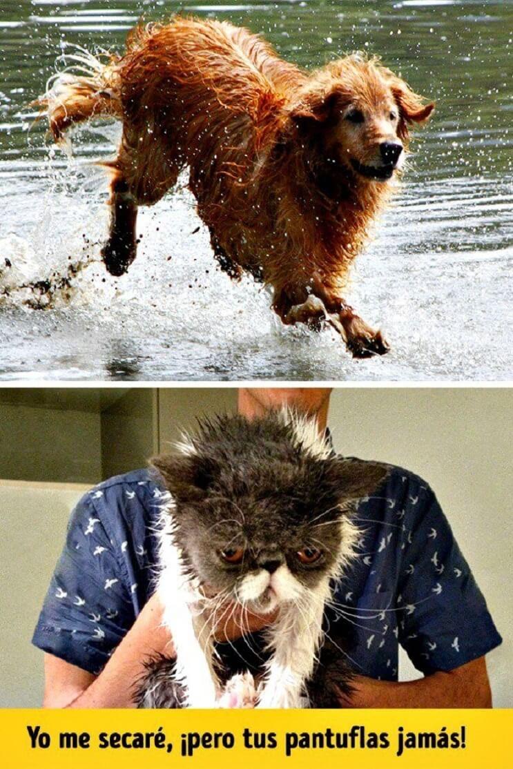 Pueden ser los gatos y perros de planetas diferentes Estas imágenes lo muestran 1