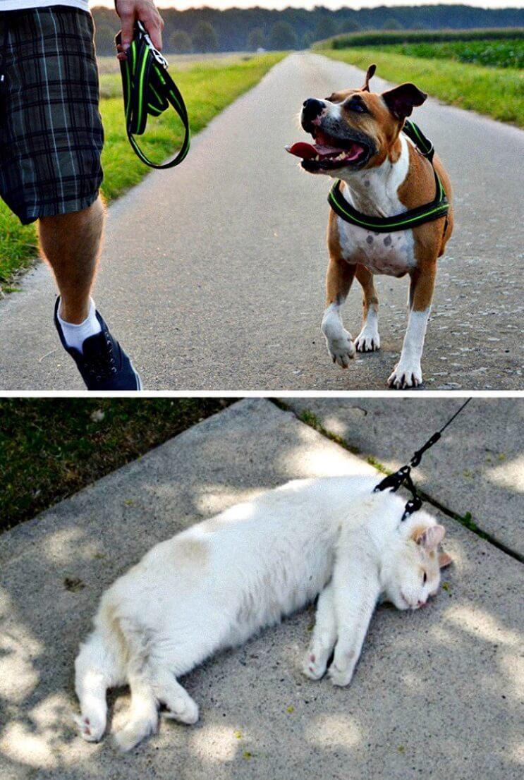 Pueden ser los gatos y perros de planetas diferentes Estas imágenes lo muestran 2