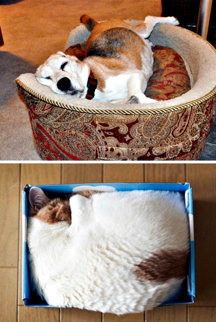 Pueden ser los gatos y perros de planetas diferentes Estas imágenes lo muestran 4