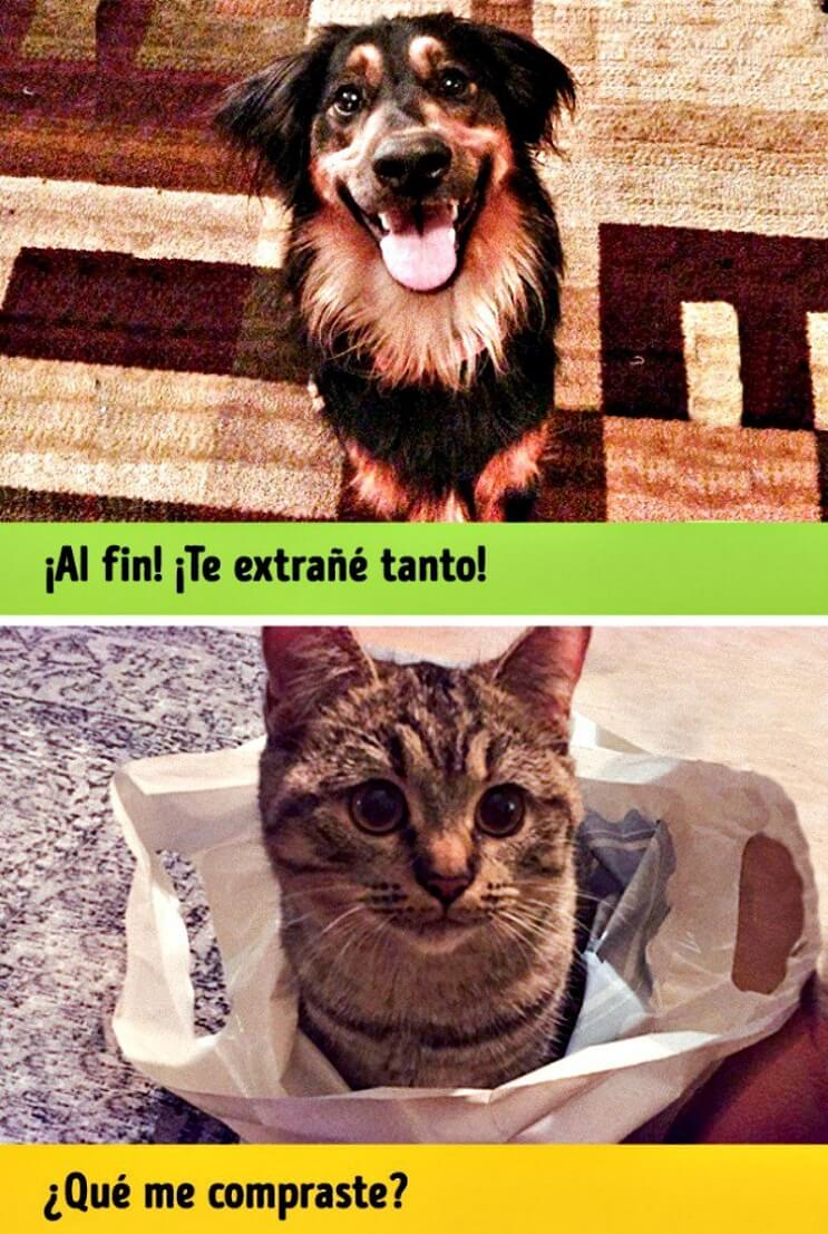 Pueden ser los gatos y perros de planetas diferentes Estas imágenes lo muestran 7