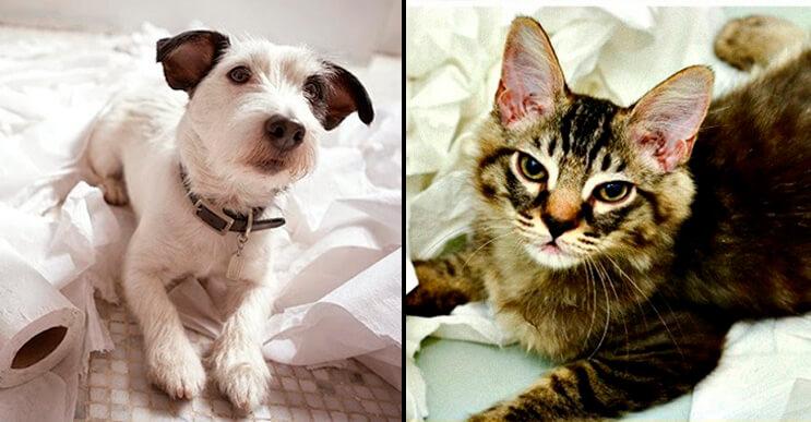 Estas imágenes muestran que los gatos y perros parecen ser de planetas diferentes