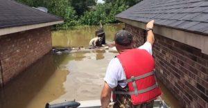 Rescatan a dos perritos pitbull después de las inundaciones de Lousiana