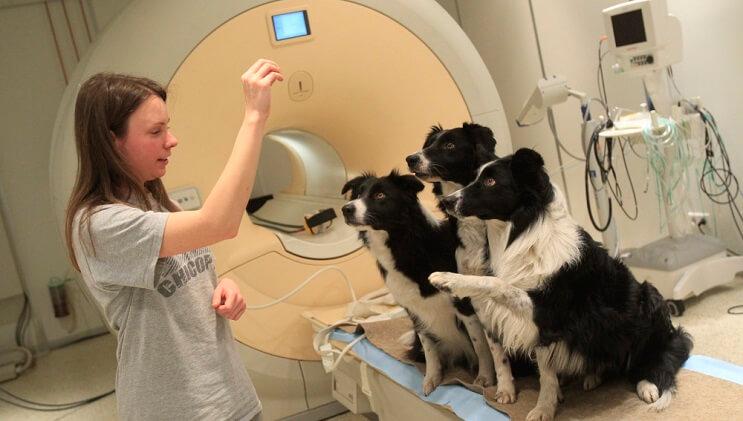 Un estudio ha demostrado que los perros sí saben lo que les estamos hablando 02