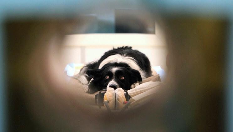 Un estudio ha demostrado que los perros sí saben lo que les estamos hablando 04