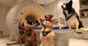 Un estudio ha demostrado que los perros sí saben lo que les estamos hablando