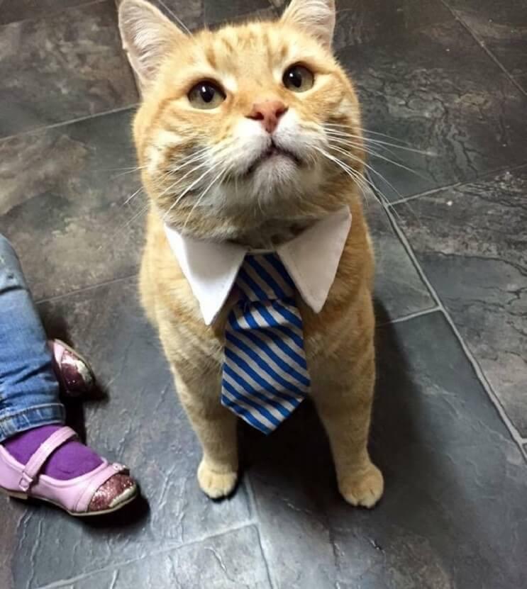 Un gato alegra la vida de su dueño que fue diagnosticado con cáncer 6 (1)