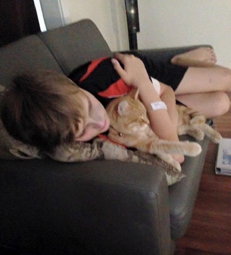Un gato alegra la vida de su dueño que fue diagnosticado con cáncer3 (1)