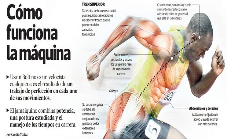 Usain Bolt como funciona su cuerpo
