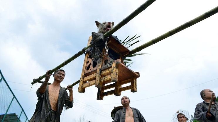 festival de perros 3