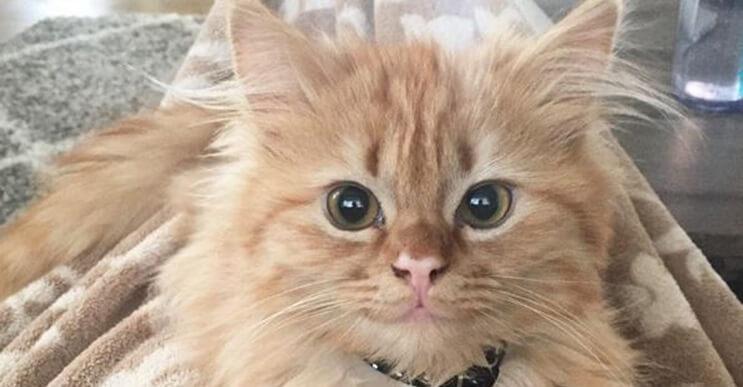 Conoce a Rey, la gatita más feliz del mundo.
