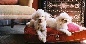 Lujoso hotel en Budapest admite mascotas y les permite gozar magníficas experiencias