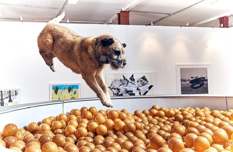 Inauguran la primera exposici n de arte contempor neo para for Piscina para perros