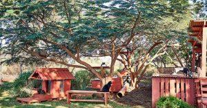 Conoce este increíble santuario de gatos en Hawái
