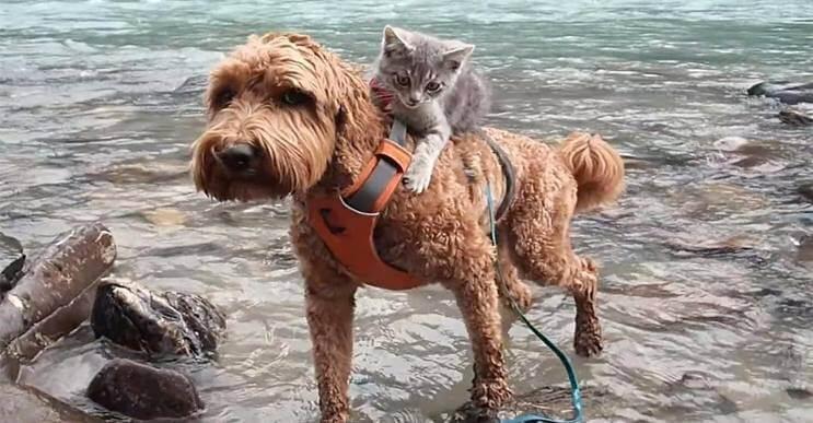 Tierna Amistad Un Perro Y Un Gato Son Los Mejores Amigos Mottpe