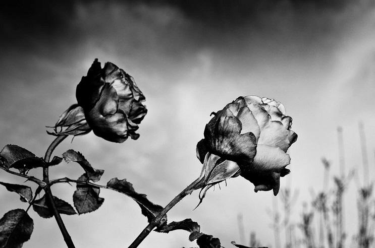 5-datos-para-conseguir-las-mejores-fotografias-en-blanco-y-negro03