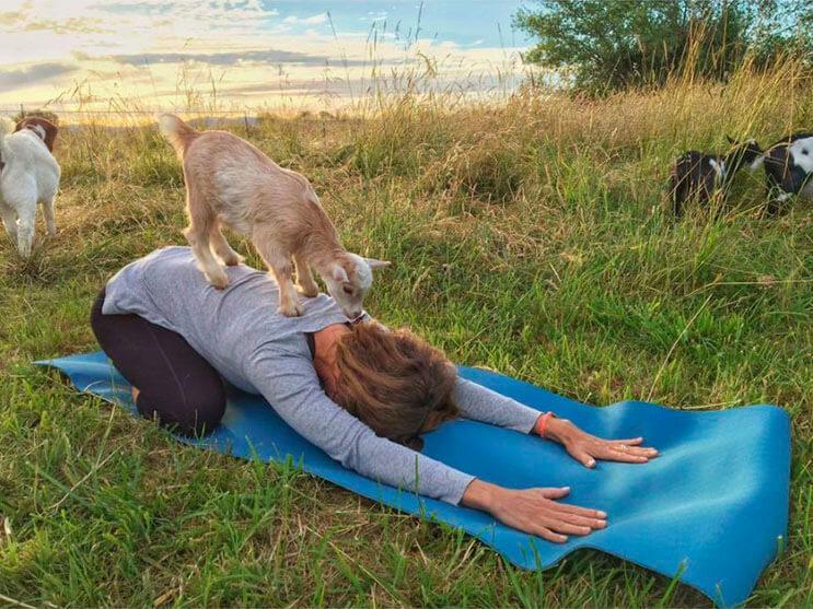 a-estas-cabras-les-gusta-el-yoga-y-lo-hacen-de-una-forma-divina-5