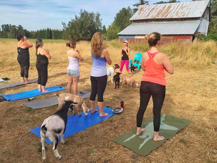 a-estas-cabras-les-gusta-el-yoga-y-lo-hacen-de-una-forma-divina-6