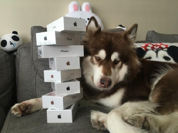 billonario-compra-para-su-perro-8-iphones-7s-1