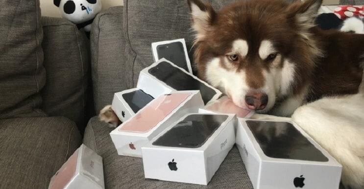 Billonario compra para su perro 8 iPhones 7