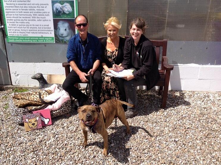 el-perro-mas-desolado-del-mundo-cae-en-manos-de-anthony-hopkins-y-se-convierte-en-la-nueva-estrella-de-transformers-5-familia